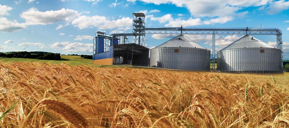 фото пшеница на элеватор